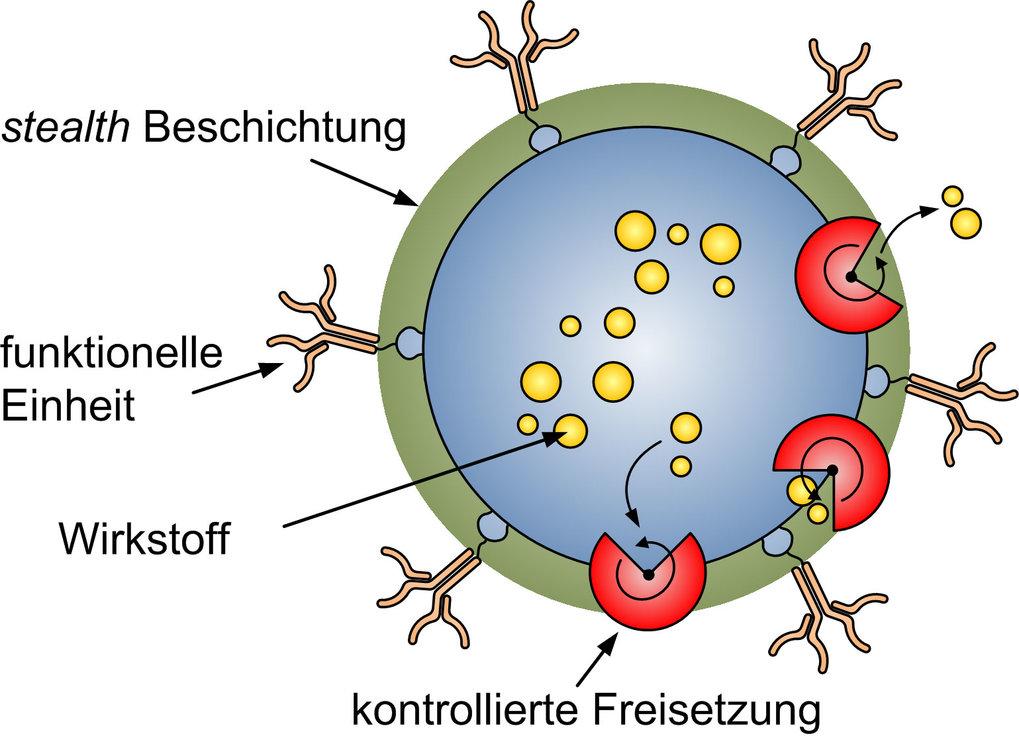 chematische Darstellung eines Wirkstoffträgerpartikels. Gezeigt sind die stealth Beschichtung, die funktionelle Einheit als Antikörper sowie ein kontr
