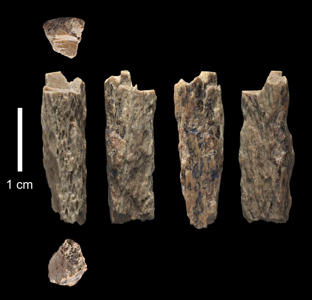 """Dieses Knochenfragment (""""Denisova 11"""") wurde 2012 in der Denisova-Höhle in Russland von russischen Archäologen entdeckt und gehörte der Tochter einer"""