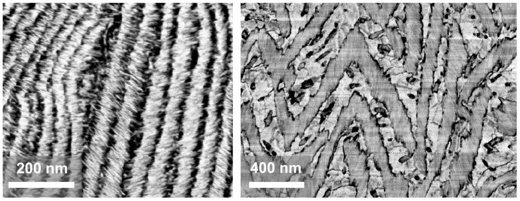 Rasterkraftmikroskopische Phasenbilder von eingetrockneten dünnen Filmen von Polyethylenoxid-Polypeptid-Blockcopolymeren.
