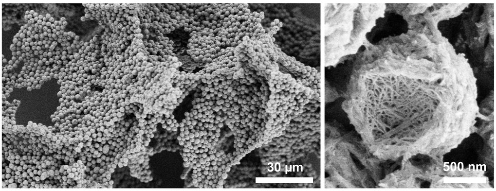 Kristallines Poly(2-isopropyl-2-oxazoline) mit hierarchischer  Struktur, hergestellt durch isotherme Kristallisation aus verdünnt  wässriger Lösung