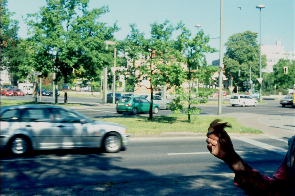 <strong>Abb. 3</strong>: Vögel in Städten (wie das abgebildete Nachtigallmännchen an einem Verkehrsknotenpunkt in Berlin) verschaffen sich im Verkehrs