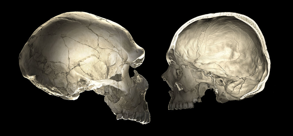 Neandertal genes influence brain development of modern humans