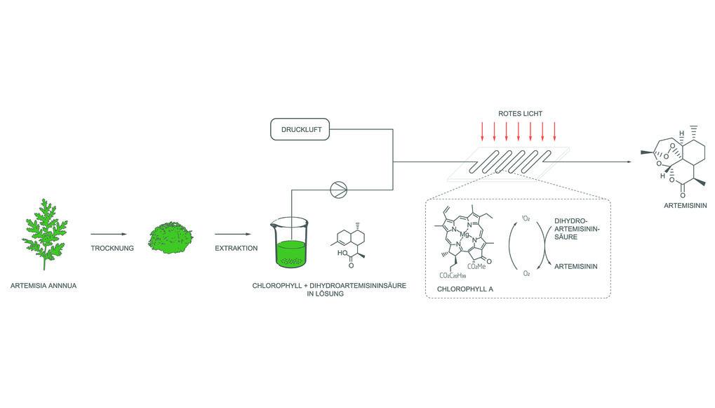 Abb. 1: Herstellung von Anti-Malariawirkstoffen aus Beifussabfall.