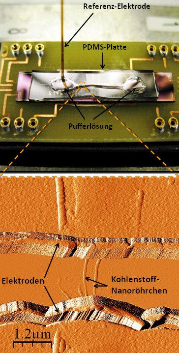Sensor-Chip für die Suche nach Krankheitserregern: Der Chip wird auf einer Platine befestigt. Sein Herzstück bilden Nanoröhrchen, die zwei Platin-Elek