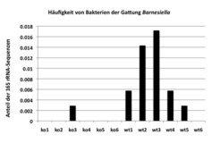 <b>Abb. 2</b>: Die relative Häufigkeit einer Bakterienart der Gattung <i>Barnesiella</i> in sechs Knockout-Mäusen (ko1-k06), deren <i>B4galnt2</i> nic