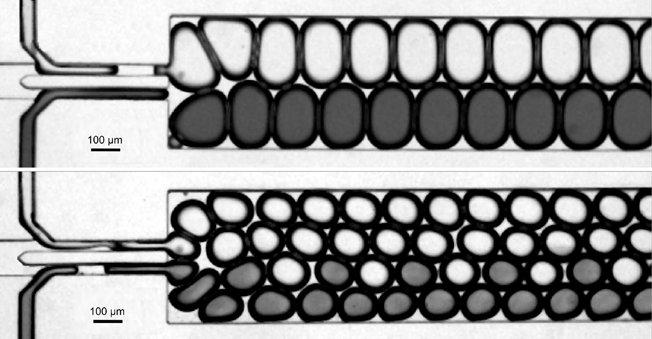 <strong>Abb. 2: </strong>Selbst-assemblierende Kräfte am Werk: Pumpt man eine Emulsion  aus gleich großen Wassertropfen, die sich sehr dicht in einer