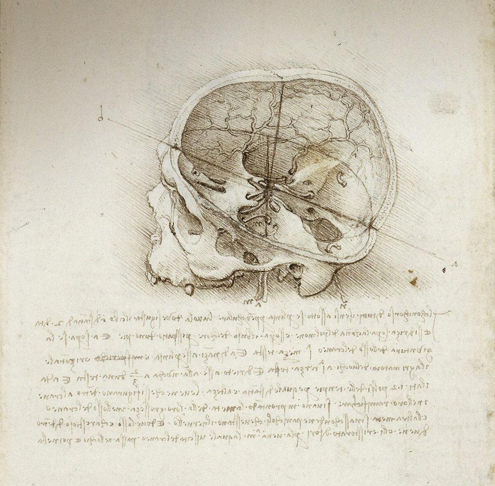 The body according to Leonardo da Vinci | Max-Planck