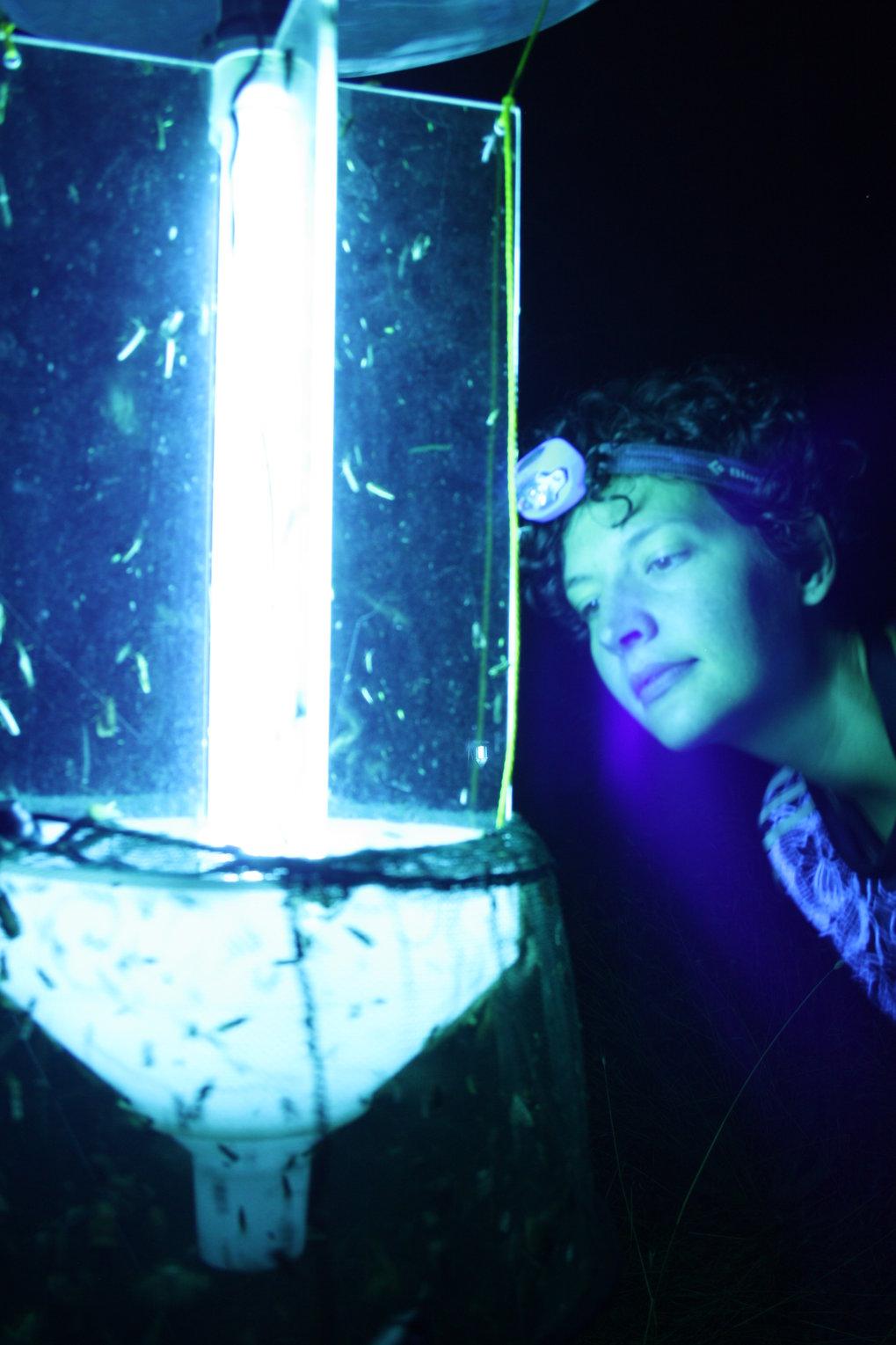 Theresa Hügel beim Fang der Nachtfalter.