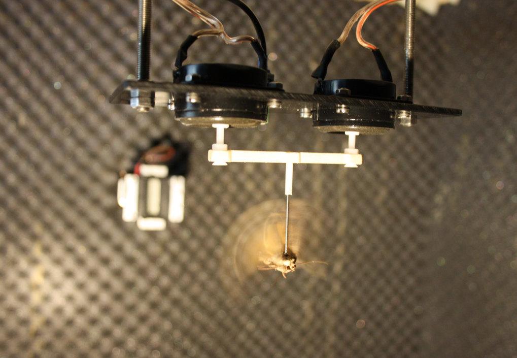 Der Versuchsaufbau zeigt, wie der Nachtfalter über eine starre Struktur mit den Membranen der Lautsprecher verbunden ist, welche die Flugkraft der Tie