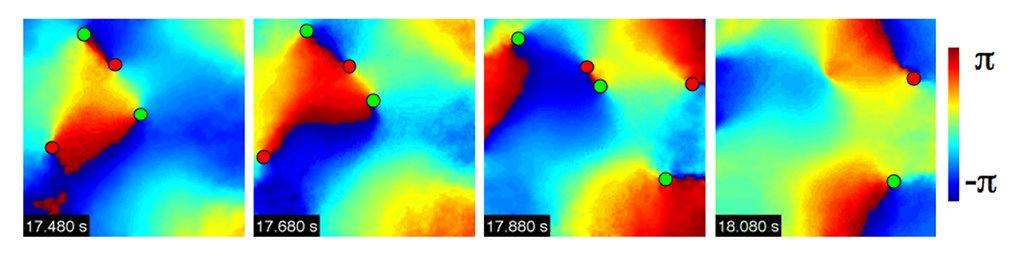 Fibrillation in der Zellkultur. Dargestellt ist die Phase der  rotierenden Wellen und die Position der Phasensingularitäten (rot = im  Uhrzeigersinn r