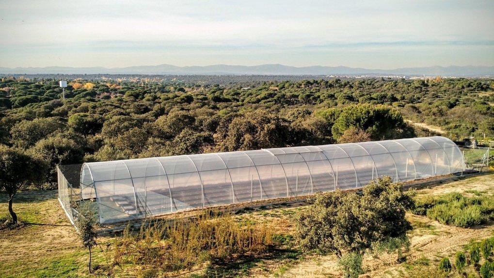 Die Forscher haben die Anpassungsfähigkeit von Arabidopsis-Pflanzen an den Klimawandel in Gewächshäusern untersucht. Die Art wird unter dem immer troc