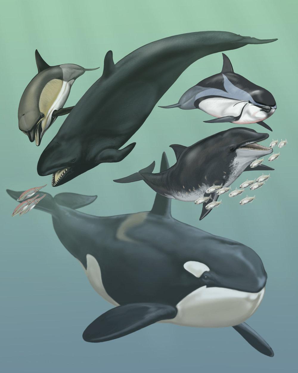 Wale und Delfine stammen von landlebenden Vorfahren ab. Für das Leben im Wasser waren manche ihrer Gene überflüssig.