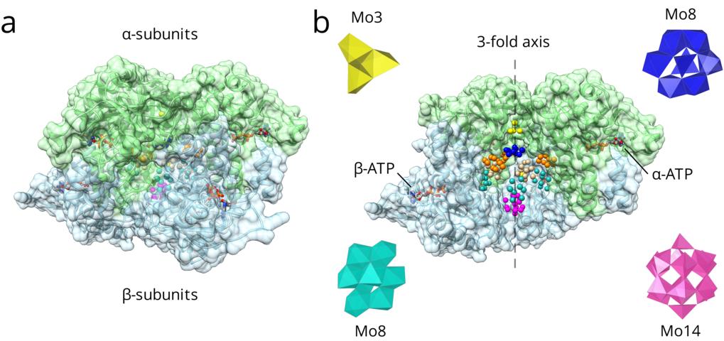 Die (αβ)3 hexamere MoSto-Struktur. (A) MoSto zeichnet sich durch eine käfigartige Architektur mit einem vollständig verschlossenen Hohlraum aus, der a