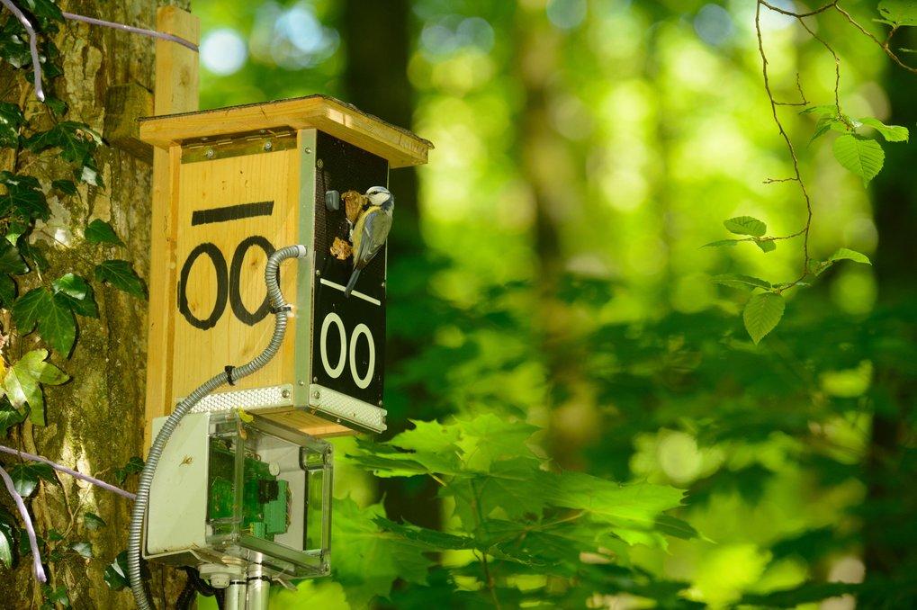 """Futter für die Küken: Blaumeise an einer """"Smart nest-box""""."""