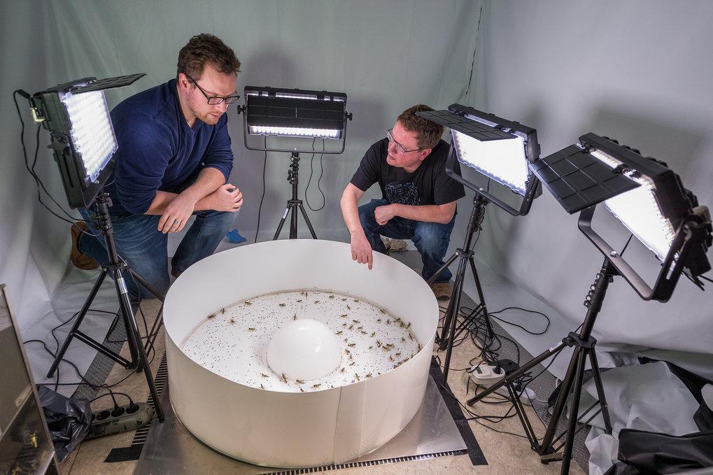 In seinem Labor in Konstanz untersucht Iain Couzin und sein Doktorand Jake Graving das Schwarmverhalten von Heuschrecken im Labor. Dafür haben die For
