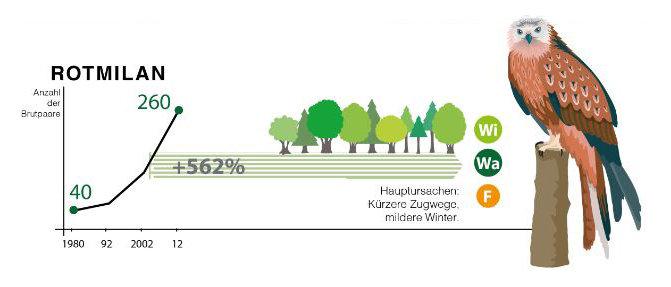 Auch der Rotmilan ist ein Kurzzieher. Er überwinterst meistin Frankreich, Spanien oder Portugal. Am Bodensee hat er in den letzten Jahren zugenommen.