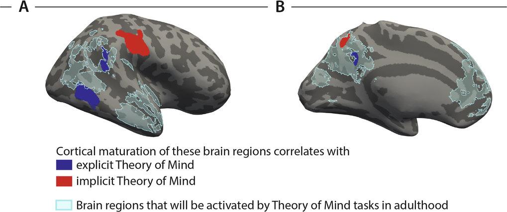 Am sprachlichen Denken über das, was die Katze denkt, waren andere Hirnregionen beteiligt als an den non-verbalen Prognosen über das Verhalten der Kat