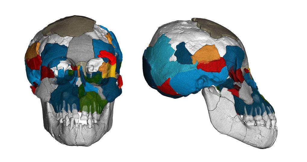 Lucy had an ape-like brain