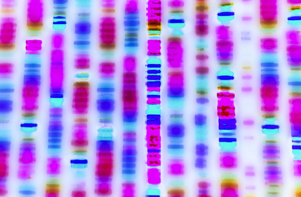 Auch 20 Jahre nach Entschlüsselung des humanen Genoms ist das Erbgut des Menschen zu einem großen Teil noch immer ein Geheimnis.