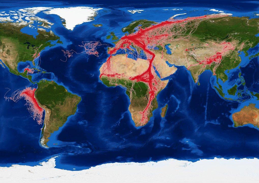 Karte mit Wanderungsbewegungen, wie sie in der Datenbank Movebank gespeichert werden.
