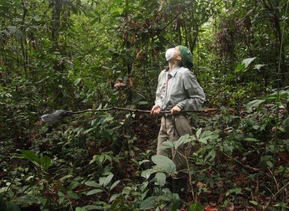 Das Team von Roman Wittig sammelt einmal im Monat von jedem habituierten Schimpansen Kot und Urin. In den Ausscheidungen der Tiere fahnden Fabian Leen