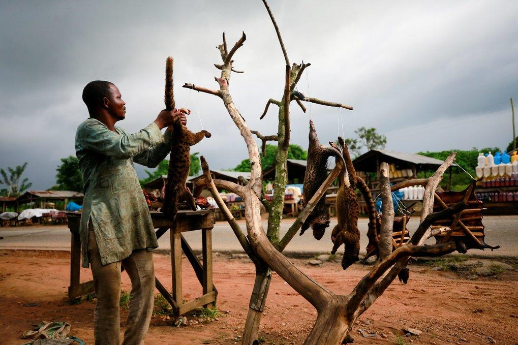 Ein Verkäufer von Buschfleisch bietet seine Ware am Straßenrand zum Verkauf an. Die schlechten hygienischen Bedingungen auf Wildtiermärkten begünstige