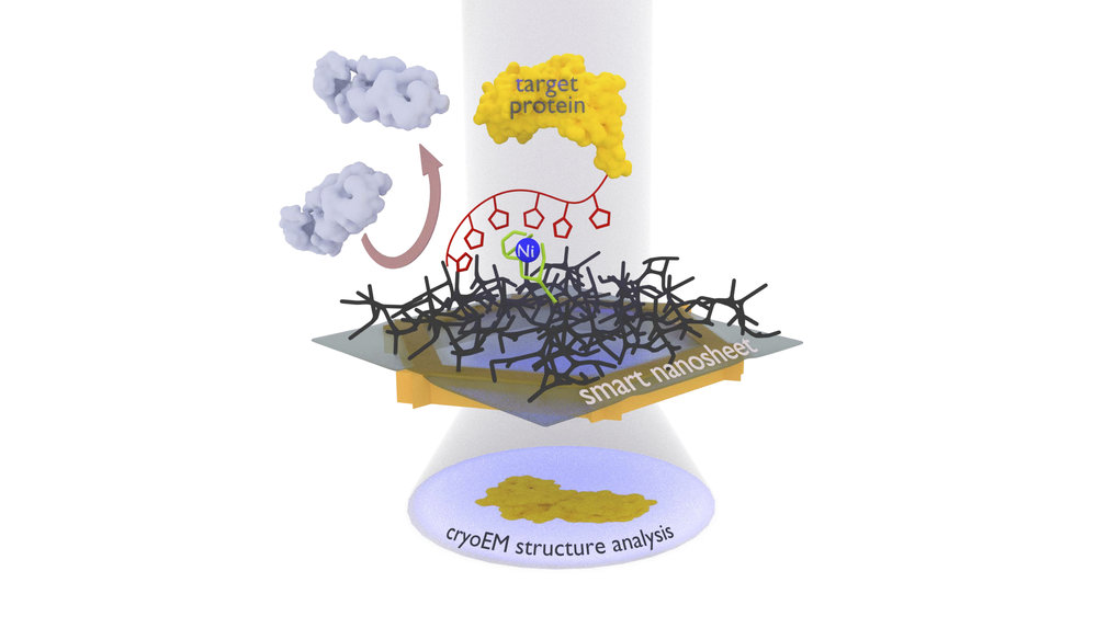 <p>How smart, ultrathin nanosheets go fishing for proteins</p>