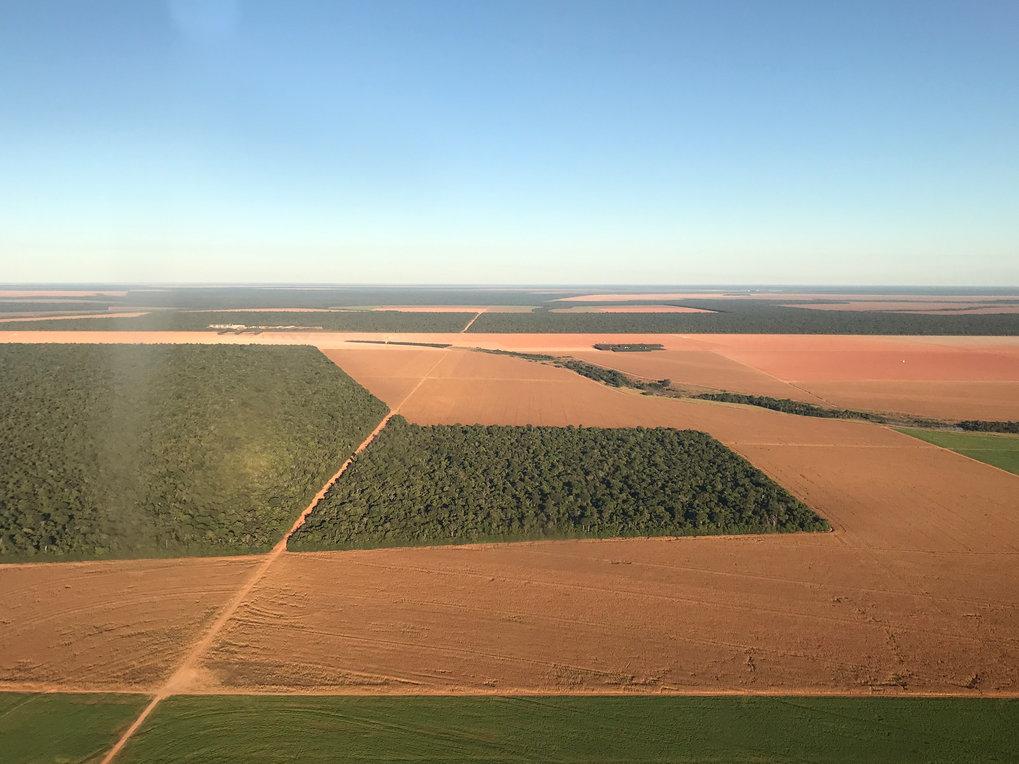 Landwirtschaft auf dem Vormarsch: Am Rand des Amazonasbeckens müssen große Teile des Waldes Ackerflächen weichen. Das lokale Klima wurde dadurch trock