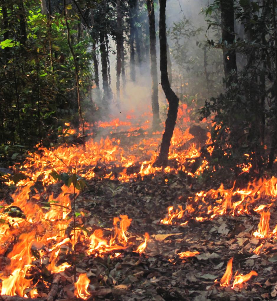 Unterschätzte Bedrohungen: Feuer am Waldboden sind für Satelliten unsichtbar, Atto kann auch solche Brände anhand von Messungen des Rauchs registriere