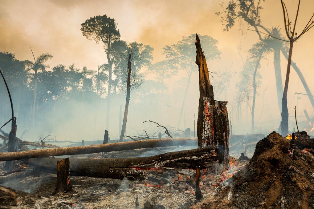 Viele der Brände gehen auf illegale Brandrodungen zurück.