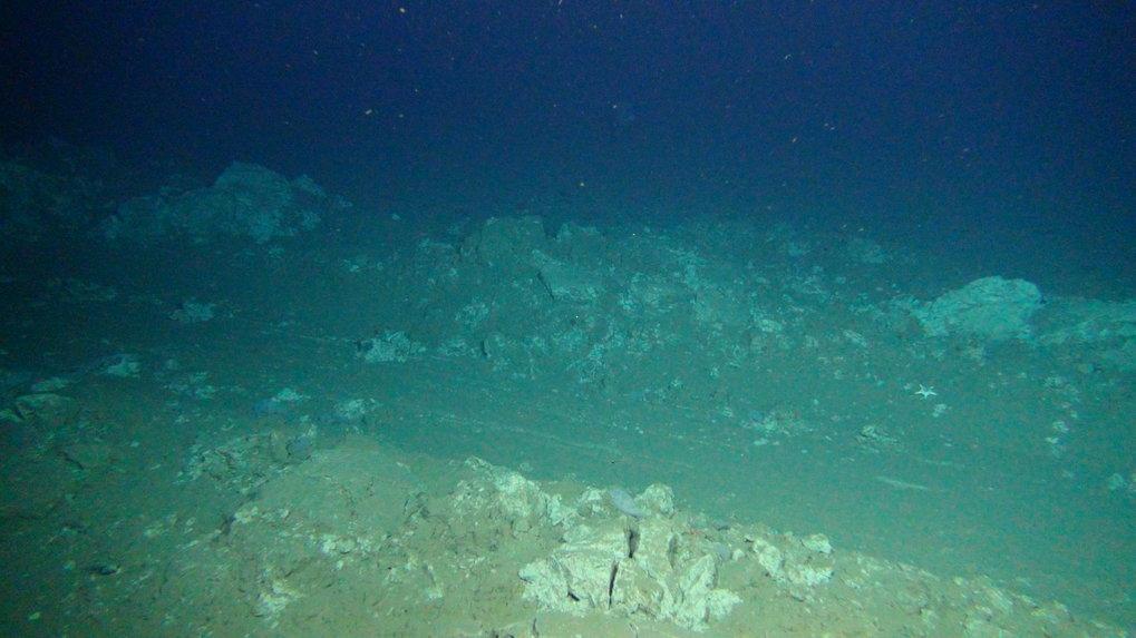 Die Pflugspuren sind auch 26 Jahre nach der Störung auf dem Meeresboden des DISCOL-Gebiets immer noch deutlich zu erkennen.