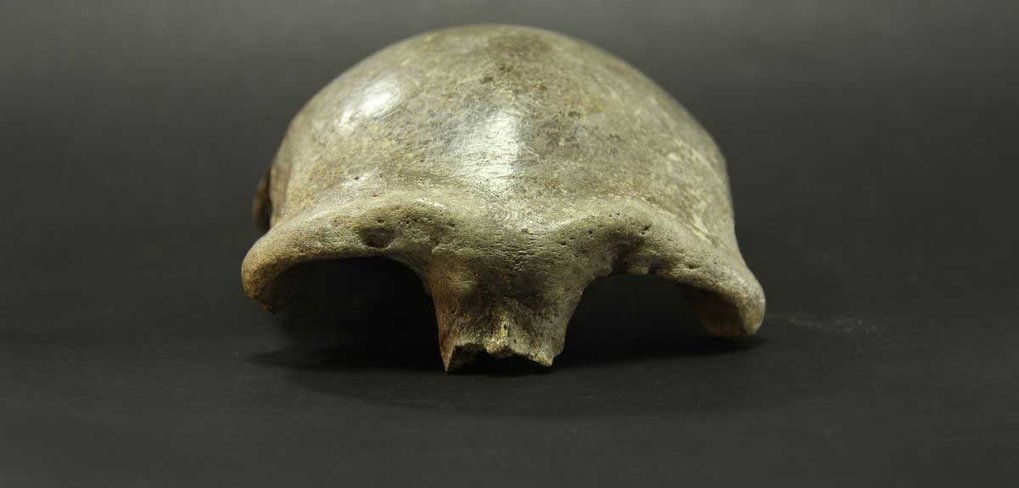 Die im Salkhit-Tal in der östlichen Mongolei gefundene Schädeldecke gehörte einer Frau, die vor 34.000 Jahren lebte. Analysen ergaben: Etwa 25 Prozent