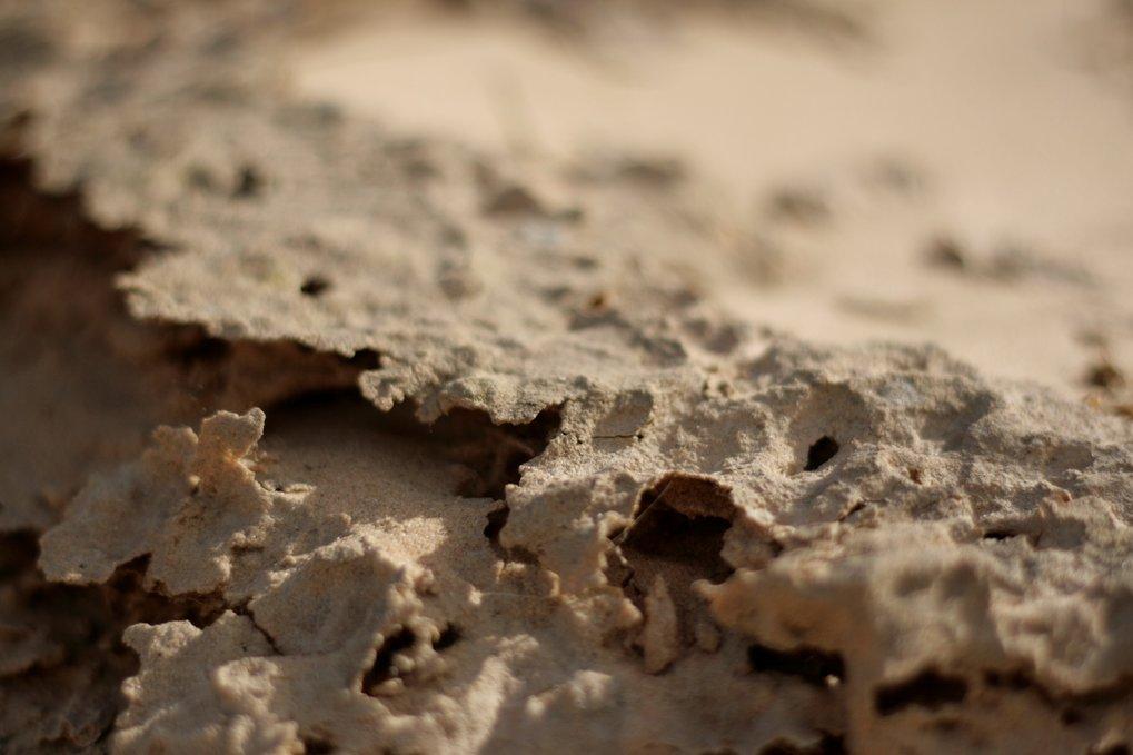 Eine rund zwei Millimeter dünne Schicht bedeckt den Wüstenboden. Über viele Jahrzehnte hinweg haben Mikroorganismen Kohlenhydrate produziert, die mit