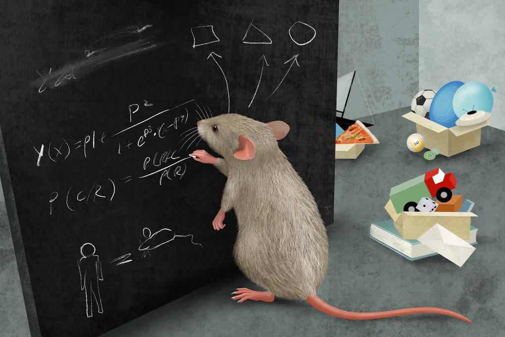 Mäuse bilden Kategorien, um ihre Welt zu vereinfachen. Nachdem sie dies gezeigt hatten, identifizierten die Forschenden Nervenzellen, die solche Kateg