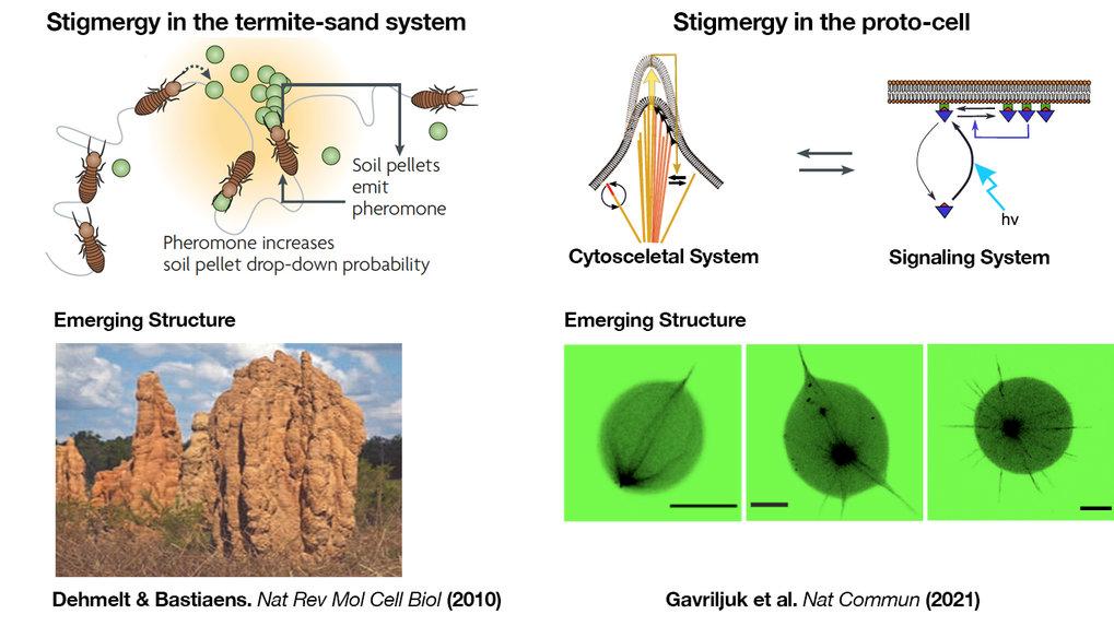Stigmergie im Termiten-Sand-System (links) und der Protozelle (rechts).