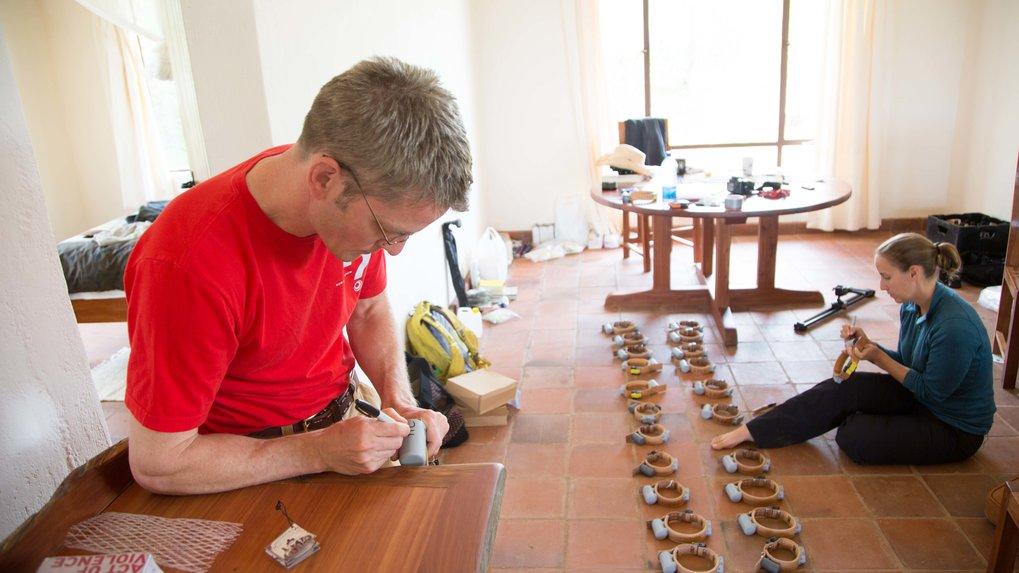 Roland Kays (links) und Meg Crofoot bei der Vorbereitung von GPS-Halsbändern. Mit diesen Ortungsgeräten haben die Forschenden eine Gruppe von 25 Pavia