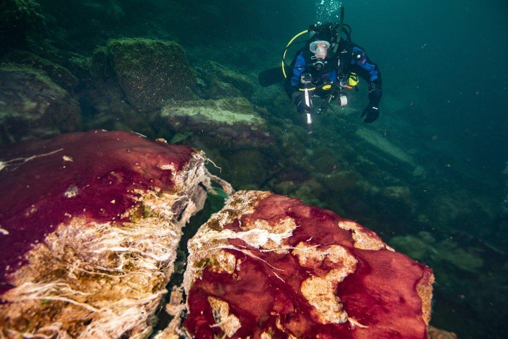 Ein Taucher beobachtet die violetten, weißen und grünen Mikroben, die die Felsen im Middle Island Sinkhole des Lake Huron bedecken.
