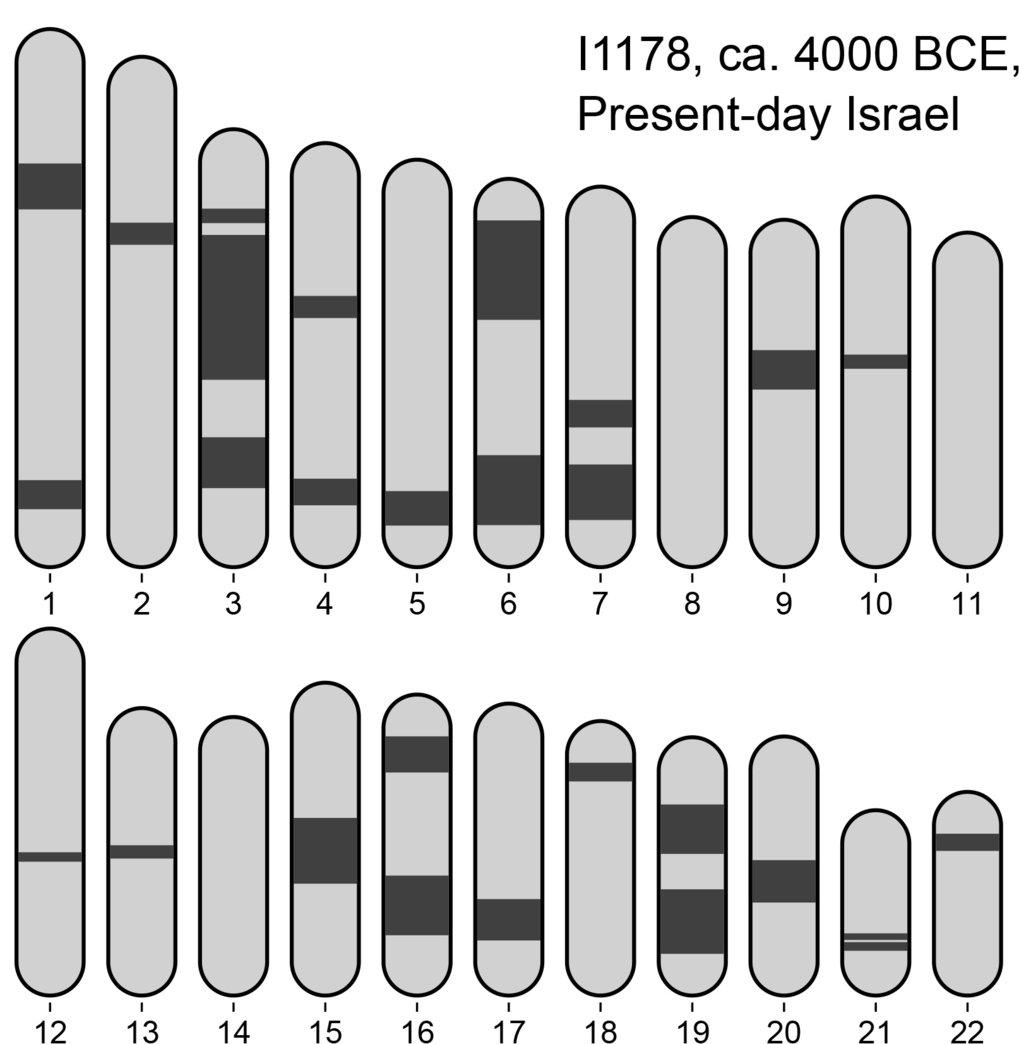 Diese Abbildung illustriert genomische Anzeichen für eine nahe Verwandtschaft der Eltern eines Individuums, das vor ca. 6.000 Jahren im heutigen Israe