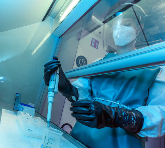 Zahnschmelzproben von Tierzähnen werden in einem nasschemischen Labor verarbeitet, um sauerstoffhaltige Verbindungen für die Analyse stabiler Isotope