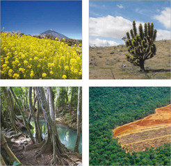 Swamp, mountain and desert; plants have adapted to many diverse environments. However, deforestation, particularly in the Amazon, threatens this biological legacy.