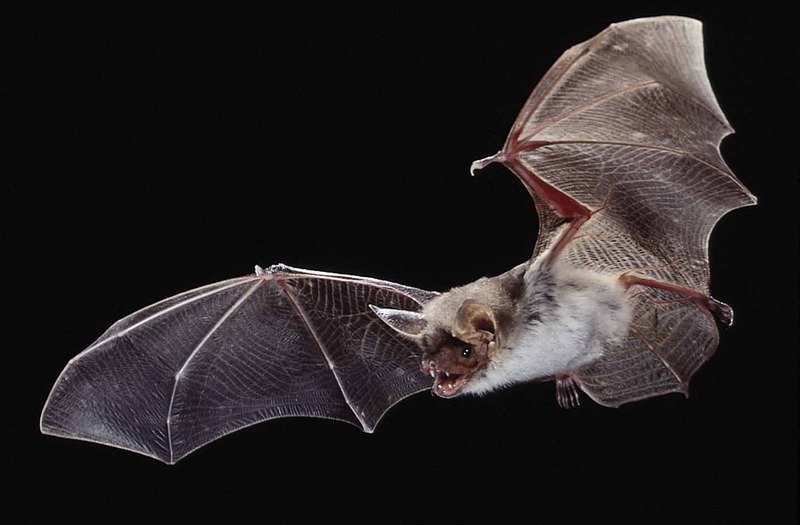 Bats Have Both A Magnete And A Sun Compass Max Planck