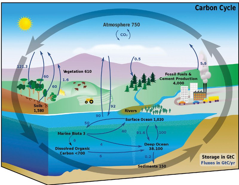 <b>Fig. 1 | The carbon cycle. Storage and movement of carbon in land- and water-based systems.</b>