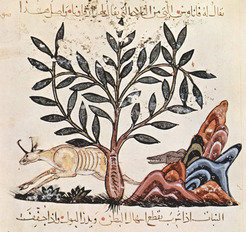 'The Atrâghâlus Plant with Hunting Scene', illustration from 'De Materia Medica' of Dioscorides by an Iraqi painter, 1224