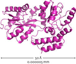 Fig. 1: X-ray crystallographic characterization of a three-dimensionally folded maltose-binding protein.