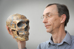 Face to face: Svante Pääbo holds the skull of a Neanderthal.