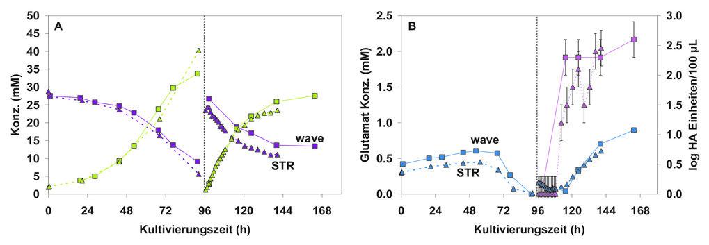Vergleich des Zellwachstums (0-96 h) und der Influenzaproduktion (96-168 h) (A/Equi2/Newmarket 1/93 H3N8) in MDCK- Zellen im klassischen Rührkessel (5
