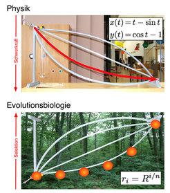 Oben: Das Brachistochronenproblem der Physik untersucht, auf welcher Bahn eine Kugel am schnellsten eine Kugelbahn herunterrollt. Diese als Zykloide b