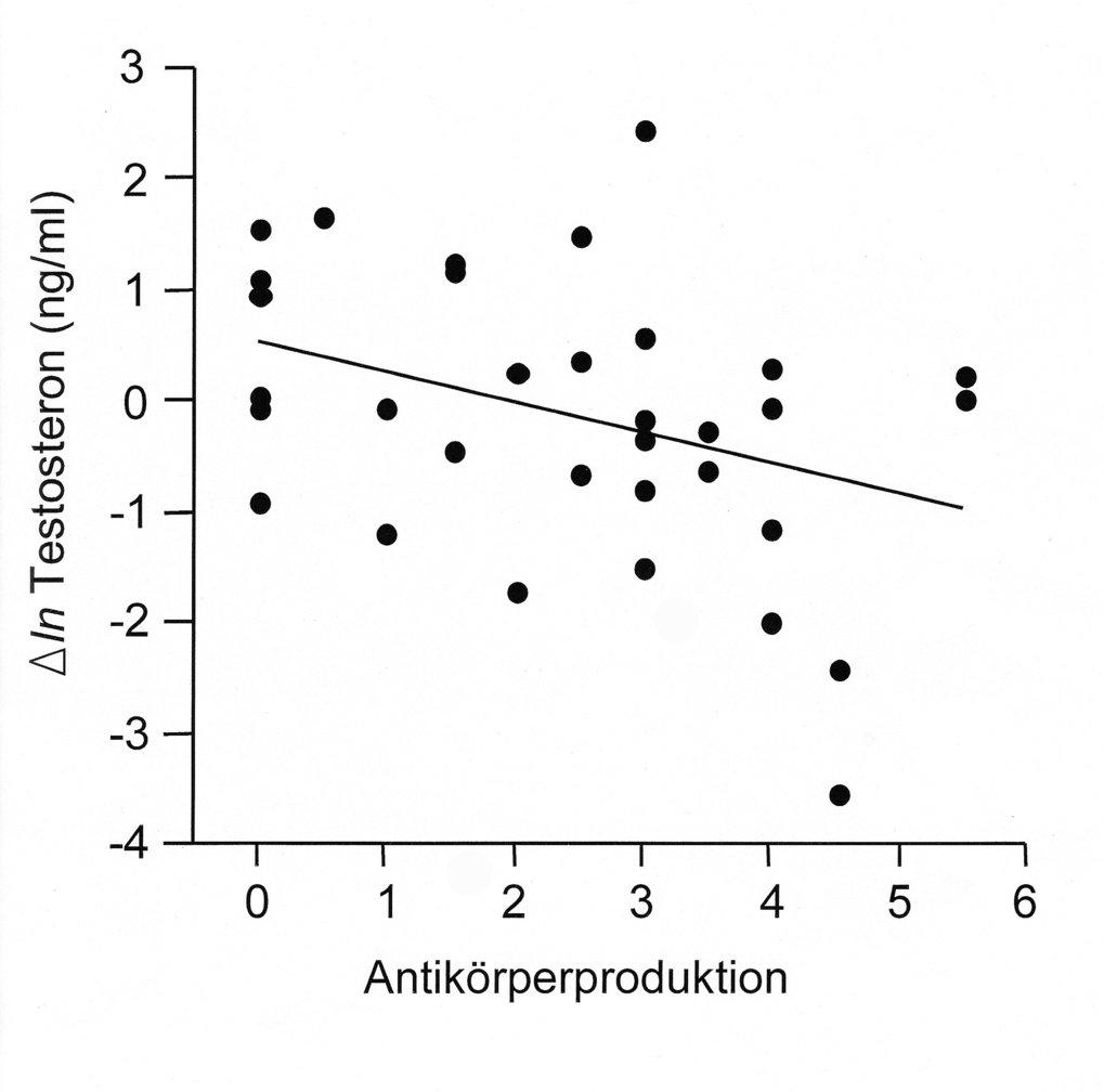Trade-offs mit der Investition in die Immunabwehr bei männlichen Stockenten. Die Grafik zeigt, dass die Testosteronwerte deutlich sinken, wenn die Män