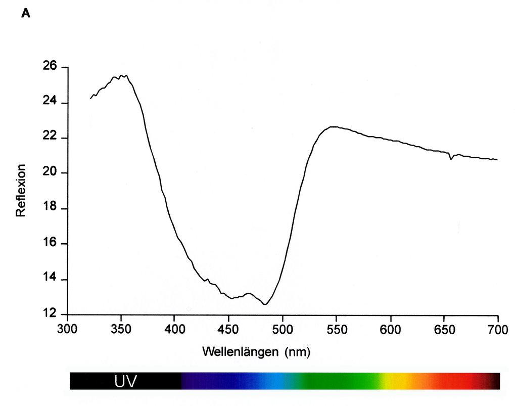Reflexionsspektrum eines gelben Schnabels von einem Stockenten-Männchen. Da das menschliche Sehvermögen durch das Fehlen eines vierten, im UV-Bereich