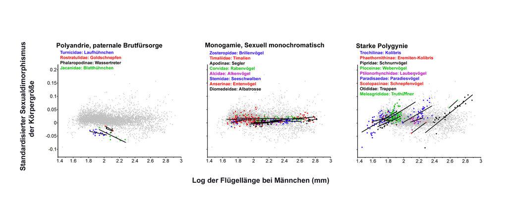 Standardisierter Flügellängen-Dimorphismus (log der Flügellänge bei Männchen - log der Flügellänge bei Weibchen) versus Größe der Männchen in Subfamil